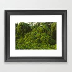 Jungle Plants in Pantanal, Brazil. Framed Art Print