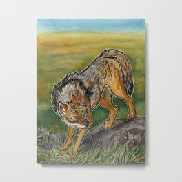 Golden Jackal Metal Print