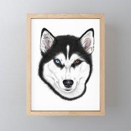 Husky different eyes Framed Mini Art Print