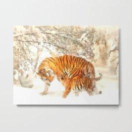 Siberian Amur Tigers Metal Print
