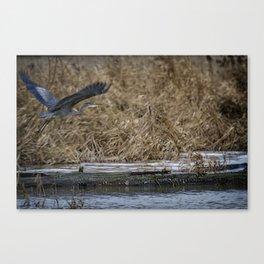 Flight of the Heron No. 1 Canvas Print