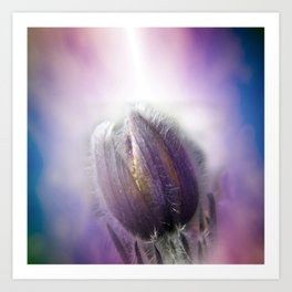 Pasque-flower on texture Art Print