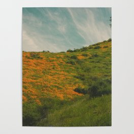 California Poppies 017 Poster