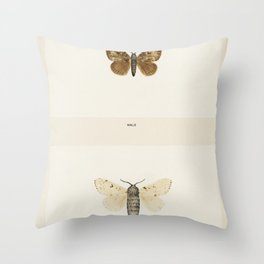 Ailanthus Silkmoth (Attacus Cynthia) from Moths and Butterflies of the United States (1900) by Sherm Throw Pillow