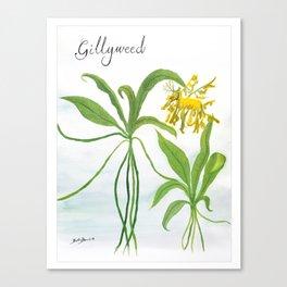 Gillyweed Botanical Art Canvas Print