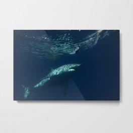 Great White Shark Full Metal Print