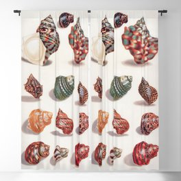 Unknown Title by Maria Sibylla Merian // Vintage Sea Shells Colorful Shapes and Sizes with Shadows Blackout Curtain