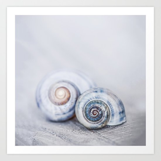 Blue Shells on white washed wood in soft pastel blues Art Print