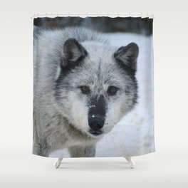 Lone wolf roams the Canadian Rockies Shower Curtain