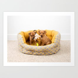 Two Small Dog Mixed Breed Puppies Art Print