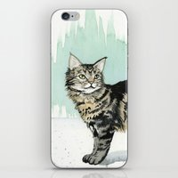 maine iPhone & iPod Skins featuring Maine Coon by Priscilla George
