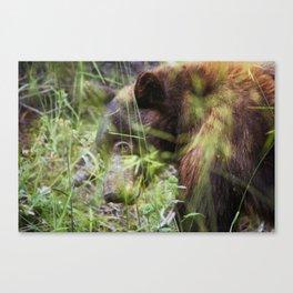 Black Bear - Sequoia Nat'l Park Canvas Print
