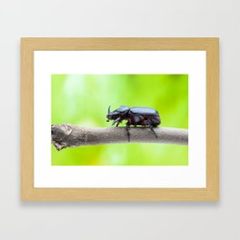 rhinoceros beetle Framed Art Print