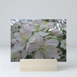White Spring Blossom Mini Art Print