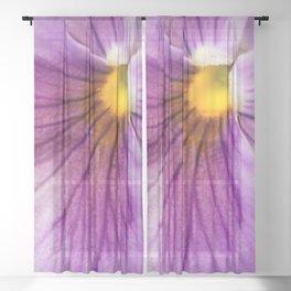 Purple Pansy Flower Close-up #decor #society6 #buyart Sheer Curtain