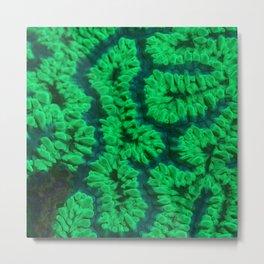 Fluorescent coral Metal Print