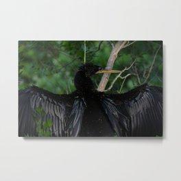 Drying His Wings Metal Print