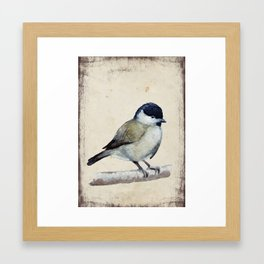 Marsh tit Framed Art Print