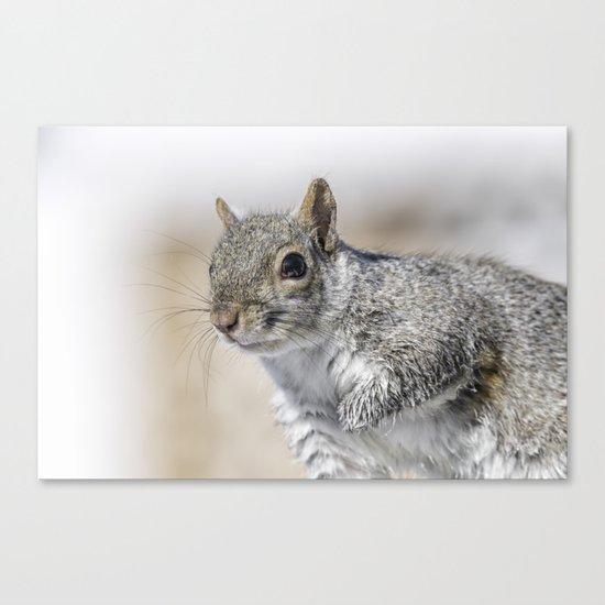 Wet paw Squirrel Canvas Print