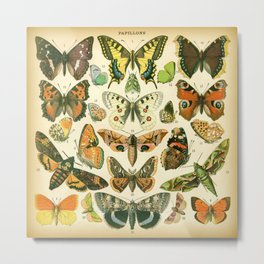 Papillons 1 Metal Print
