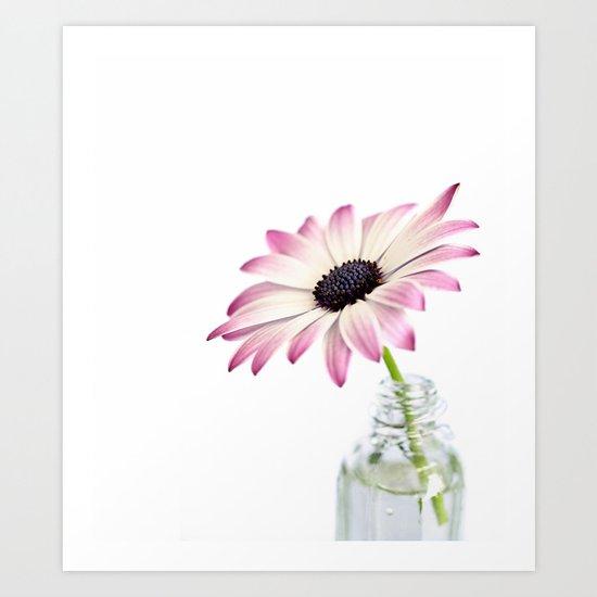 Delicate Single Pink Daisy Flower Art Print
