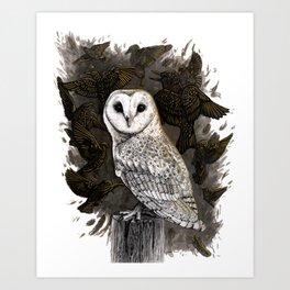 Barn Owl and Golden Starlings Art Print