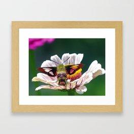 Hummingbird Moth Framed Art Print