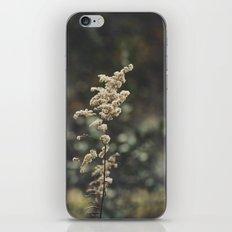 Winterscape iPhone & iPod Skin