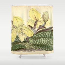 Paphiopedilum concolor Shower Curtain