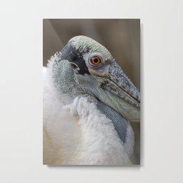 Roseate Spoonbill Portrait I Metal Print