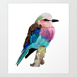 Lilac Breasted Roller Bird Art Print