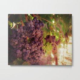 Vineyard Vines Metal Print