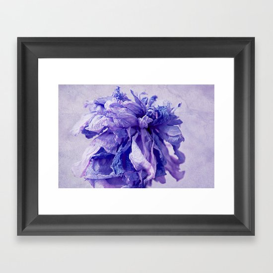 purple paeonie Framed Art Print