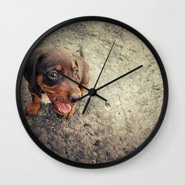 funny puppy Wall Clock