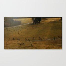 Migration - Nature Canvas Print
