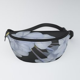 Pale Blue Plumbago Isolated on Black Background Fanny Pack