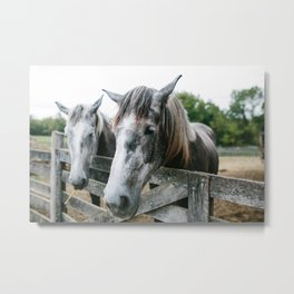 Horse II // Ohio Metal Print