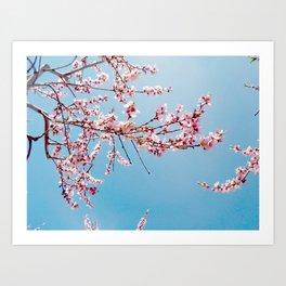 Blooming peach tree Art Print