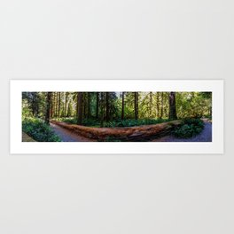Hoh Rainforest, Olympic Peninsula, Washington Art Print