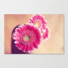 Pink Gerber Daisies  Canvas Print