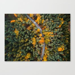 Top Down Forest Road Canvas Print