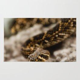 Rattlesnake-III Rug