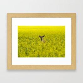 Buck in Canola Framed Art Print