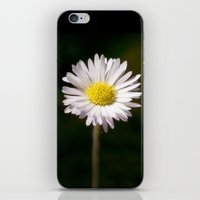 daisy iPhone & iPod Skins featuring Daisy by Lori Anne Photography