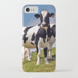 Young Holstein cows iPhone Case