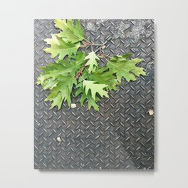 Oak Leaves on Metal Metal Print