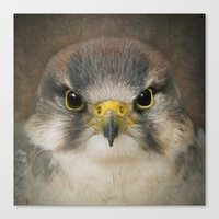 falcon Canvas Prints featuring Falcon by Pauline Fowler ( Polly470 )