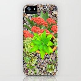 Flowering Crassula Perfoliata iPhone Case