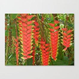 Maui Heliconia Canvas Print