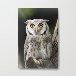 You can observe a lot by just watching Metal Print